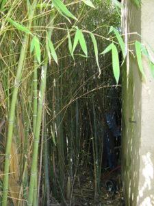 rolf, im bambus verloren
